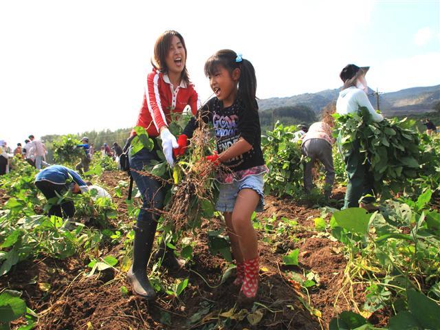 優秀賞 (君津市農業委員会 会長賞) 「楽しい大豆の収穫」  三沢貞夫