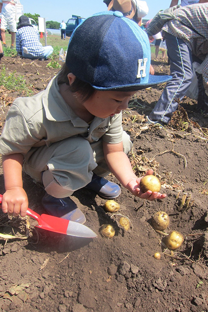 君津市農業協同組合 代表理事 組合長賞「お芋ゴロゴロ」 横浜市 上原心